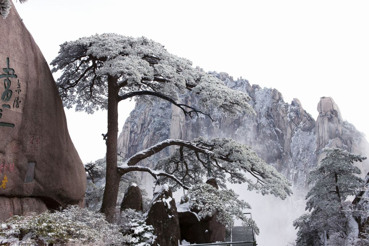 Welcome Pine in snow - Mt. Huanghan